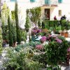 The plant and flower festival in the nearby town of Cetona